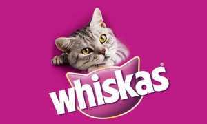 Корм для кошек «Вискас»: виды, состав, отзывы покупателей и ветеринаров