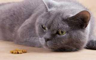 Кошка отказывается от воды и еды