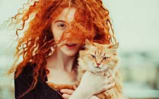 Рыжий кот во сне: к прибыли или предательству