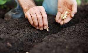 Лучше не спешить: когда сажать тыкву на рассаду в 2020 году
