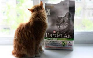 Кошачий корм «Проплан»: всем ли питомцам подходит?