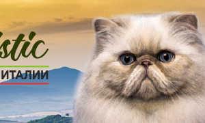 Как кормить кошку с заболеваниями ЖКТ